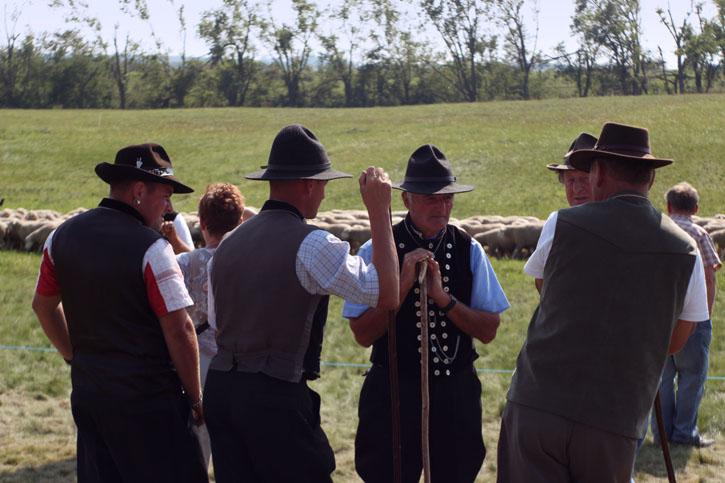 Shepherds in Morl near Halle